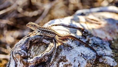 Punta Cormorant, Floreana, Galapagos