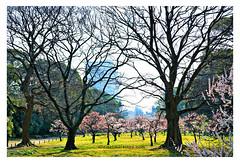 VVG@HG (Emet Martinez Photography) Tags: painterly japan garden tokyo japanesegarden spring hamarikyugarden topazsoftware emetmartinezphotography emetmartinezcom topazimpression vangoghpaintstrokes