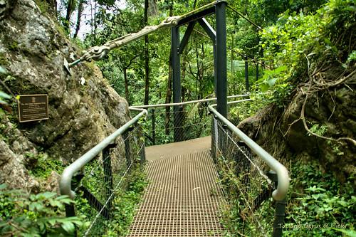 Bridge below Purling Brook Falls