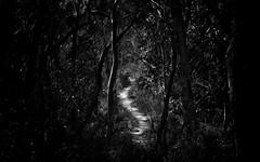The Path (Bass Photography) Tags: nature blackwhite nationalpark path bushwalking lowkey bushwalk northsydney kuringgai