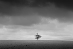 Heavens above (Scott Baldock) Tags: white black tree monochrome field canon countryside solitude iii hill minimal ii 5d minimalism essex 2470 rettendon