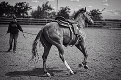 Legs (B&W) (Calpastor) Tags: california ranch horse college barn training silver grey farm gray arena ag western stable broke colt pleasure equine visalia quarterhorse ironstar lunging gelding tulare