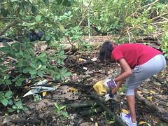 13-Env&CivSoc-World-Water-Day-LCK-Cleanup-26Mar16 (Habitatnews) Tags: mangrove capt nus worldwaterday limchukang iccs