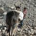 Boy with Donkey, West Bank