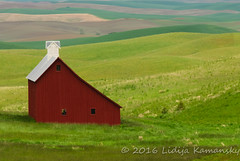 Red Barn (Lidija Kamansky) Tags: red color green horizontal barn landscape outdoors washington day farm farmland pasture pacificnorthwest rollinghills redbarn scenics springtime farmbuilding ruralscene nonurbanscene rurallandscape rollinglandscape lidijakamansky