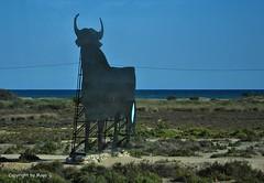 Der einsame Stier * The lonely bull * El toro solitaria * . DSC_0354-001 (maya.walti HK) Tags: espaa spain flickr bulls toros spanien 2013 stiere nikond3000 020516 copyrightbymayawaltihk