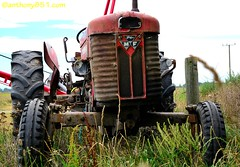 Massey Ferguson 65 (anthony851.com) Tags: mf masseyferguson multipower masseyferguson65 southbridgebranch