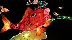 Magical Lantern Festival | Event Video (ARTtouchesART) Tags: china london art colors canon photography chinese chinesenewyear cinematic redfish lanternfestival visualart stylish shortfilm chiswickhouse filmphotography artphotography lightfestival artinstallations artexhibitions magicallantern videoproductioncompanylondon filmproductioncompanylondon