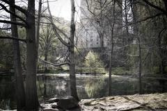 Central Park North III (Joe Josephs: 2,650,890 views - thank you) Tags: newyorkcity travel newyork landscapes spring centralpark centralparknewyork urbanlandscapes travelphotography landscapephotography urbanparks outdoorphotography joejosephsphotography