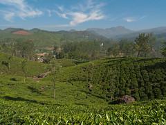 Distant mountain (Jackie & Dennis) Tags: lakshmi kerala munnar nilgiri letchmi rwh tahr ramblersworldwideholidays