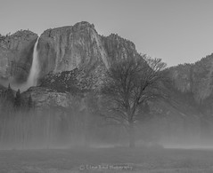 fog it up_SMB2872 (steve bond Photog) Tags: trees yosemitefalls fog nationalpark nikon yosemite yosemitenationalpark drama upperyosemitefalls stevebond stevebondphotography