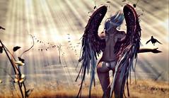 . soul on fire . (. Charlotte .) Tags: life sunlight white skye angel fire wings dove sl blueberry ferdinand soul second widow anc epiphany foch maitreya magika