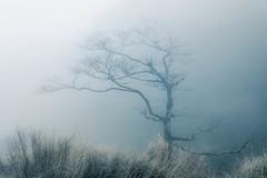 Lonely Tree (Pai Shih) Tags: mist tree nature fog landscapes nikon  nikond810
