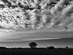 BEAUTIFUL SKY (giovannivarotti) Tags: trees sunset sky bw italy cloud tree nature field clouds italia tramonto natura campagna cielo albero bnw ravenna nubi