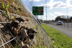 Fungi (tom_t.photography) Tags: mushrooms fungi widnes