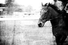 Warwick Races - Horse Racing (rjhavfc82) Tags: bw horse blackwhite racing warwick