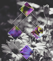 - Kubic Floral - (ArielRamos) Tags: flores flower nature floral garden flora purple fiore