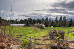 Pastoral Landscape And Barn In Spring - Cedar, Vancouver Island, British Columbia, Canada (Toad Hollow Photography) Tags: trees horse canada mountains beautiful barn rural fence landscape spring bc britishcolumbia farm nanaimo hills vancouverisland cedar pastoral hdr cherrytree bucolic
