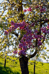 Colorful fruit tree (wolf4max) Tags: plant tree nature garden fruittree toflower