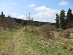 IMG_8535 (Bike and hiker) Tags: ardennen ardennes eifel hellenthal narzissen narcissen oostkantons rocherath olef krinkelt holzwarche jansbach bachtaler