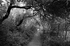 The Dark Path (Redwood Reverence) Tags: california ca trees light path clinton tunnel trail henry bern bernie trump sanders cowell 2016