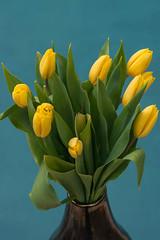 Tulips. (LisaDiazPhotos) Tags: flowers blue nature yellow tulips vase lisadiazphotos