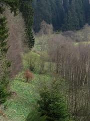 IMG_8891 (Bike and hiker) Tags: ardennen ardennes eifel hellenthal narzissen narcissen oostkantons rocherath olef krinkelt holzwarche jansbach bachtaler