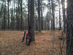 There's a trail here somewhere!  #ridethepines #weavercycleworks #custombicycle #steelisreal