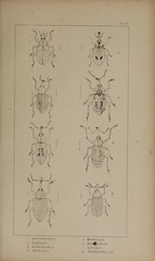 n230_w1150 (BioDivLibrary) Tags: greatbritain insect bugs beetles arthropoda californiaacademyofsciences coleoptera taxonomy:order=coleoptera colorourcollections bhl:page=39307026 dc:identifier=httpbiodiversitylibraryorgpage39307026 bhlarthropod