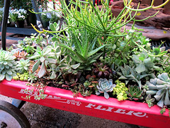 Wagon full of succulents (Bennilover) Tags: cactus green gardens nursery drought radioflyer succulents planting hardy wagons resistant greenthumbnursery
