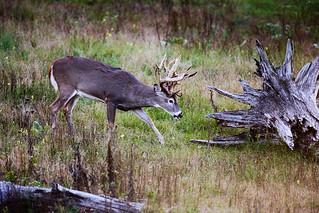 Michigan Whitetail Hunt 19