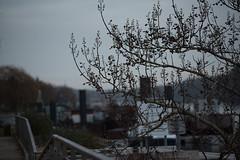 L'arbre et les quais  Conflans-Sainte-Honorine (Pierre Fauquemberg) Tags: seine nikon d750 arbre iledefrance quai yvelines conflanssaintehonorine vgtal tamron7020028 nikond750 pierrefauquemberg