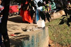 IMG_2810 Kandy Lake - stray cat (drayy) Tags: lake srilanka kandy ggg kandylake thebiggestgroupwithonlycats