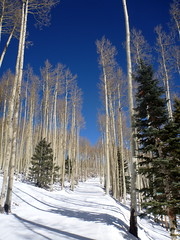 Aspens & Snow (sarowen) Tags: blue winter snow ski newmexico skiing bluesky rockymountains redriver snowskiing redrivernewmexico redrivernm southernrockies redriverskiarea
