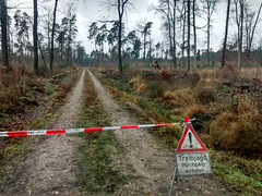 Immer mehr Treibjagden im Bienwald (PauPePro) Tags: hunting jagd wanderung bienwald naturfreundehaus treibjagd drckjagd