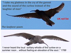 the calls of the Curlew (BSCG (Badenoch and Strathspey Conservation Group)) Tags: wildlife verse
