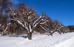 Winter wonderland after winterstorm Jonas (gourab66) Tags: travel winter weather landscape newjersey nikon snowfall lawrenceville snowscape winterstorm nikond810 nikon1635mmf4vr