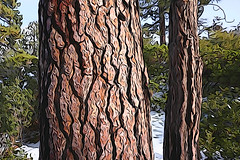 Bark, Lake Tahoe (jkup) Tags: sandharbor