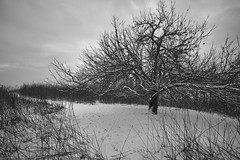 Cold Winter evening (Fredrick_Summers) Tags: road trees winter sunset blackandwhite plants snow cold weather season landscape photography minolta time sony northcarolina location emotions blueridgemountains blueridgeparkway appletree blowingrock highcountry