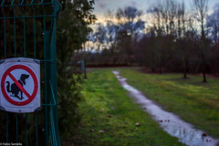Schild (fadenfloh) Tags: sign wiese hund zaun schuld