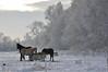 Meadow (C.Dover) Tags: paarden winter2010