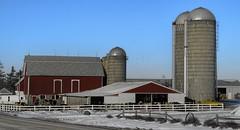 Winter in Wisconsin (MalaneyStuff) Tags: winter snow cold wisconsin nikon cows farm farmland bard 2016 d5100