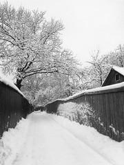 Snowy alley (aaBocharov) Tags: road street city trees winter sky cloud