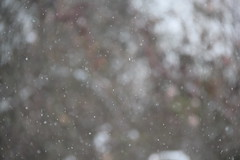 IMG_8867 (webmastermama71) Tags: trees winter boy portrait snow nature birds vines branches snowstorm evergreens