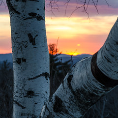 birch (paul noble photography) Tags: trees winter sunset clouds nikon maine newengland goldenhour freelancephotographer 2470f28 quakerridge hackershill nikon2470mmf28 cascomaine nikond7000 paulnobleimages quakerridgecasco paulnoblephotography