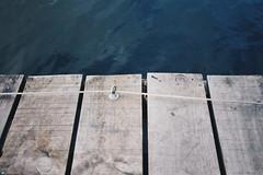 (Jaimepe Photography) Tags: naturaleza detalle rio mar madera agua nikon salamanca nikonphotos tormes nikond3300