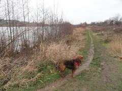2016-0109 (schuttermajoor) Tags: maastricht nederland hond che maas 2016 airedaleterrier ommetjenederland