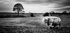 Tales from the English countryside I (Frank Busch) Tags: greatbritain blackandwhite bw monochrome field grass countryside blackwhite farm meadow barnsdale frankbusch frankbuschphotography imagebyfrankbusch wwwfrankbuschphoto