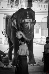 La bonne fortune (Ye-Zu) Tags: india elephant temple holy inde worldtour kumbakonam tourdumonde