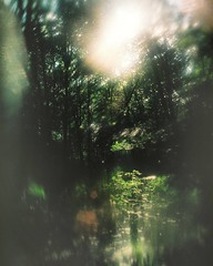 Forest Drinking I (Serg Autumnoff) Tags: green film nature forest 35mm landscape lomography shiny 35 magicforest filmphotography forestclearing ilovefilm ilovegreen filmisnotdead istillshootfilm filmisbetter instagramapp uploaded:by=instagram forestmystery autumnoff